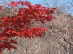 『桜』と『紅葉』を同時に見る事ができる場所は ココだ!